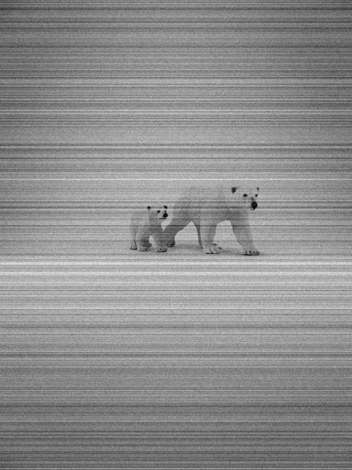 polar-bear-and-cub-1b